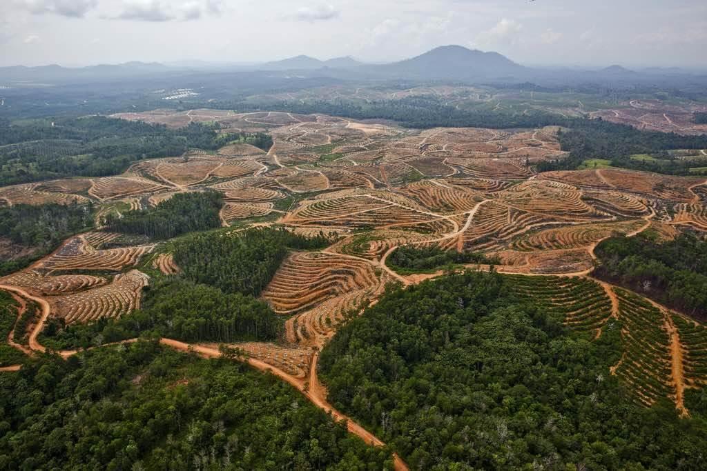 Odlesňovanie lesov v dažďovom pralese