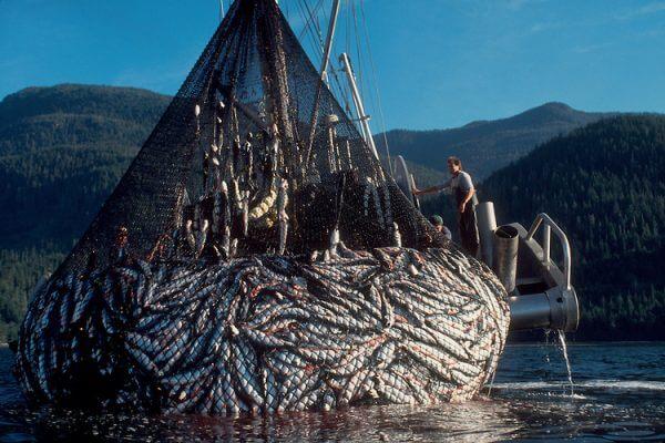 Lov rýb do loveckých sietí