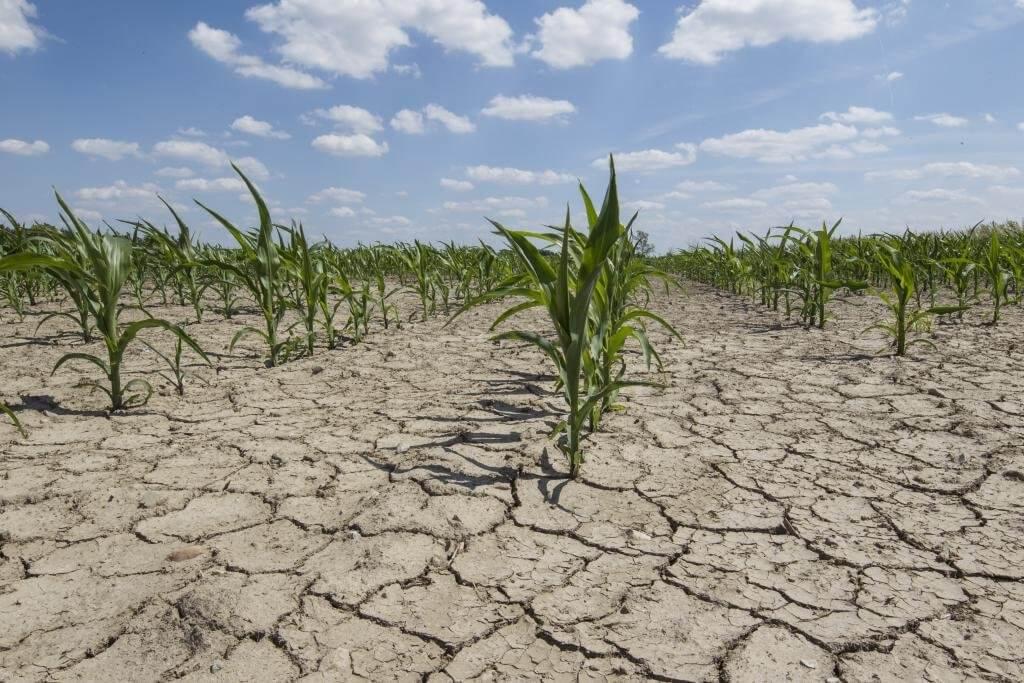 Dezertifikácia pôdy