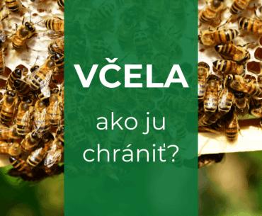 ohrozenie včiel, ako ich hrániť?